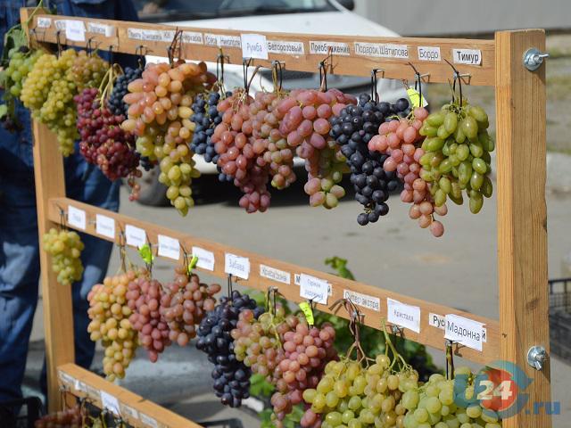 В Южноуральске прошла виноградная выставка-ярмарка