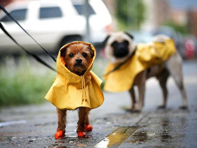 Челябинскую область ждут дождливые выходные. Прогноз погоды на три дня