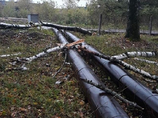 В Ашинском районе ветер повалил деревья и оставил жителей без света