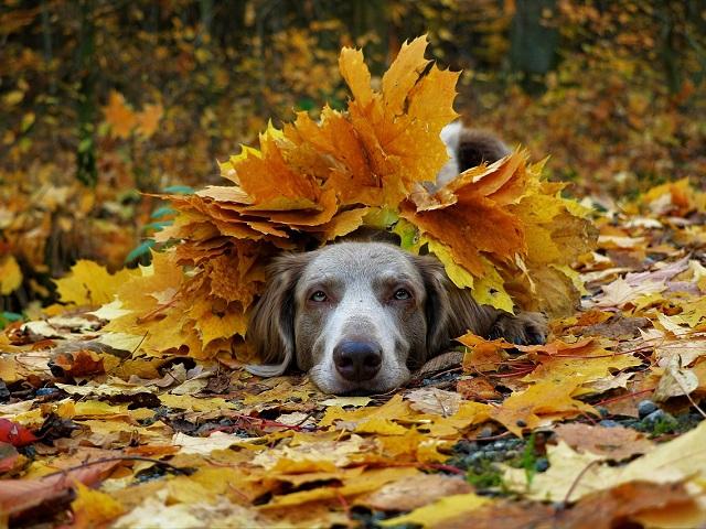 Октябрь с сюрпризом: какой погоды ждать на Южном Урале в середине осени