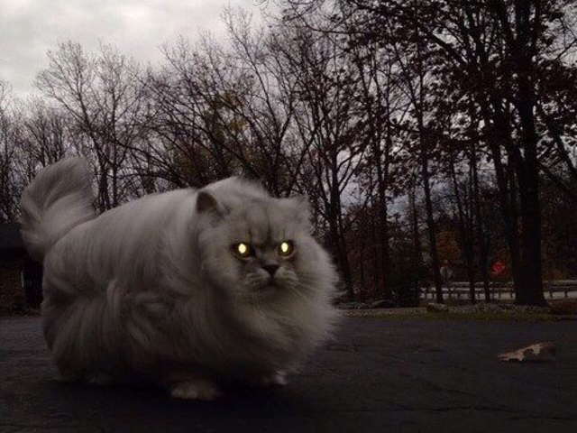 МЧС предупреждает жителей Челябинской области о штормовом ветре