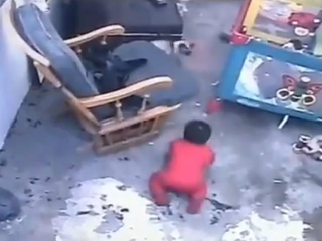 Пушистый ангел-хранитель: спасший малыша от падения с лестницы кот стал героем Сети