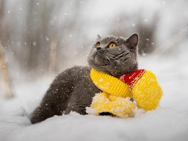 Прогноз погоды в Челябинской области на понедельник, 2 декабря