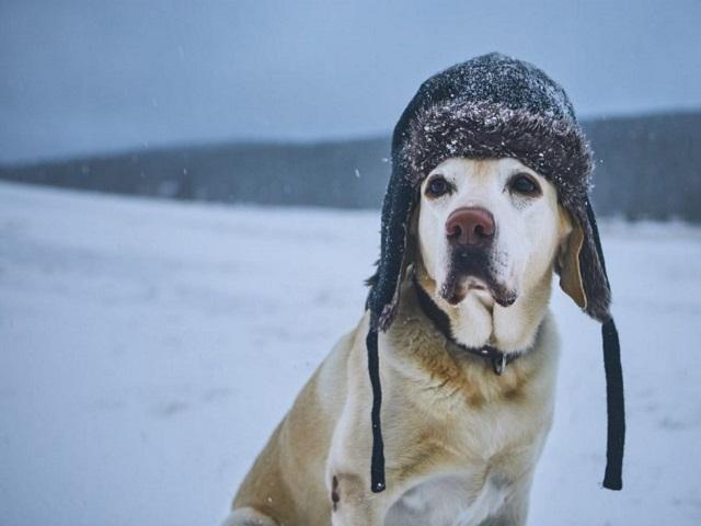 МЧС предупредило о снеге и штормовом ветре в Челябинской области