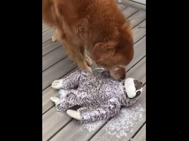 Видео дня: пользователей Сети растрогал пёс, пытающийся оживить лучшего друга