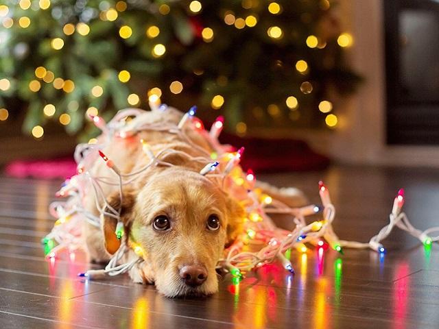 Как помочь домашним питомцам пережить новогодние праздники