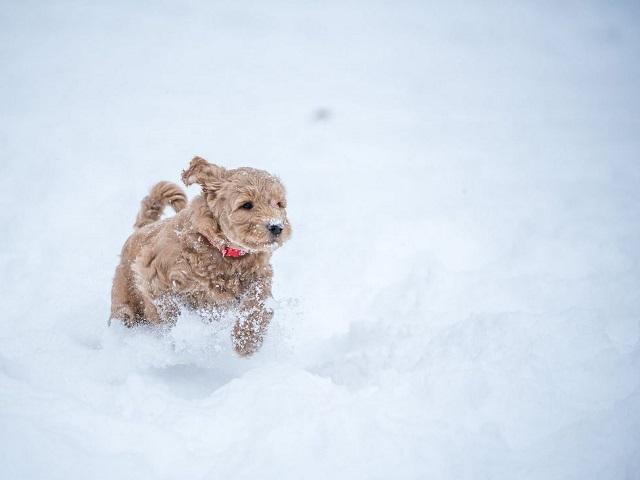 Пасмурно и снег: прогноз погоды в Челябинской области на вторник, 14 января
