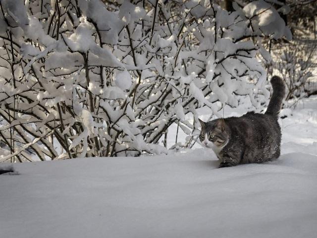 Прогноз погоды 15 января в Челябинской области: мороз и метели