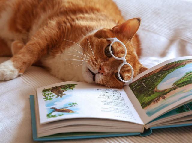 20 произведений классической литературы, которые стоит прочитать каждому