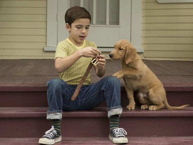 17 трогательных фильмов про собак, которые обязательно нужно посмотреть
