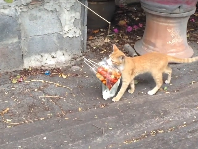 Пушистый помощник: хозяин научил котёнка доставлять шашлыки прямо домой