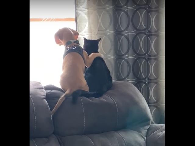 Друзья навсегда: милое видео со щенком и котом растрогало пользователей Сети