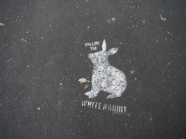 «Белый кролик»: эксперты предупредили россиян о новом виде мошенничества