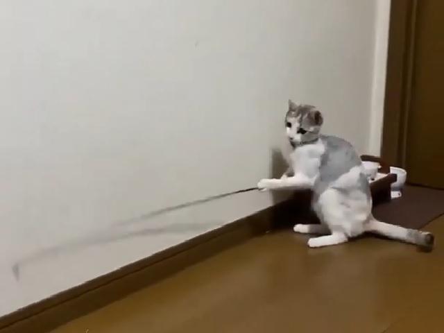 Видео с находчивой кошкой и удочкой покорило интернет