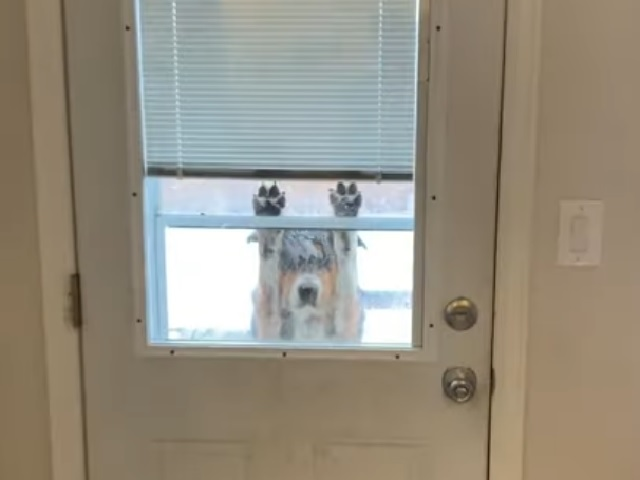 «Ну, привет»: умная собака повеселила пользователей, забавно просясь домой