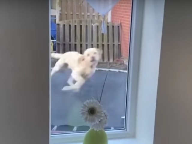 Резвящийся на батуте пёс рассмешил хозяина и привёл в восторг соцсети