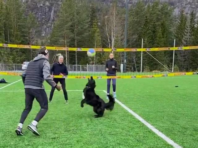 Спортивная девочка: Сеть покоряет видео с играющей в волейбол собакой