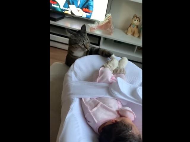 Невероятная реакция кота на нового члена семьи умилила пользователей