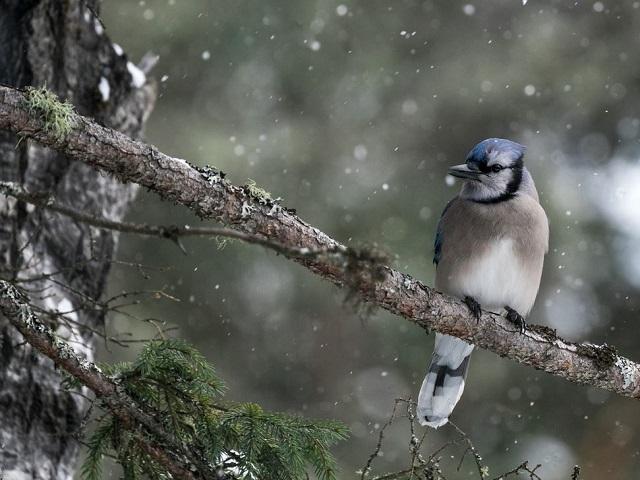 Снег и штормовой ветер: какая погода ждёт южноуральцев в четверг, 23 апреля