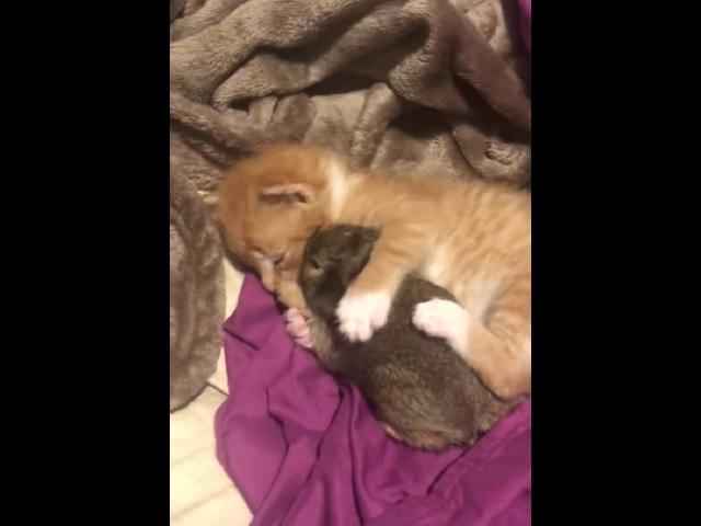 «Никому не отдам»: пользователей растрогала необычная дружба котёнка и кролика
