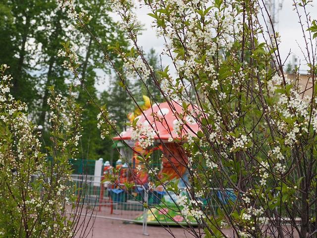 В Златоусте сотрудники парка Крылатко запустили флэшмоб красоты