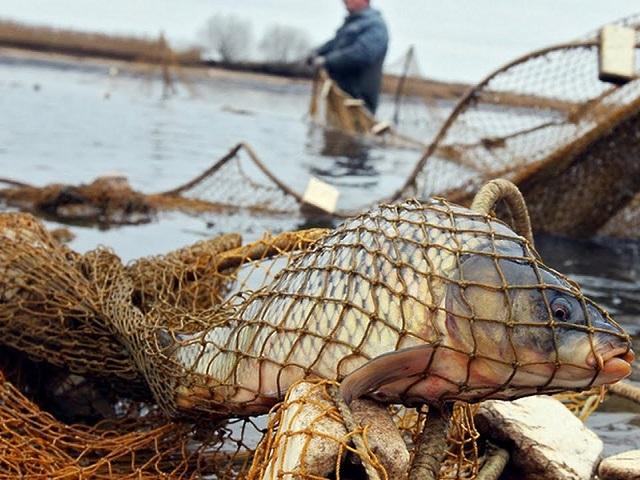 На Южном Урале будут судить браконьера за вылов рыбы на 300 тысяч рублей