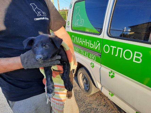 В Челябинской области зоозащитники сломали стену дома ради спасения щенка