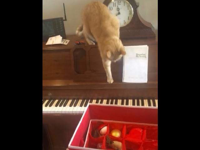 Незапланированный шедевр: котик хотел прыгнуть с пианино и стал звездой интернета