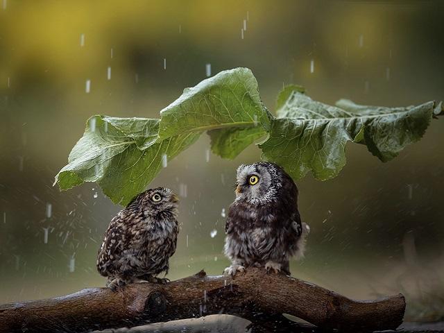 Грозы, град и шторм: какая погода ждёт южноуральцев в понедельник, 6 июля