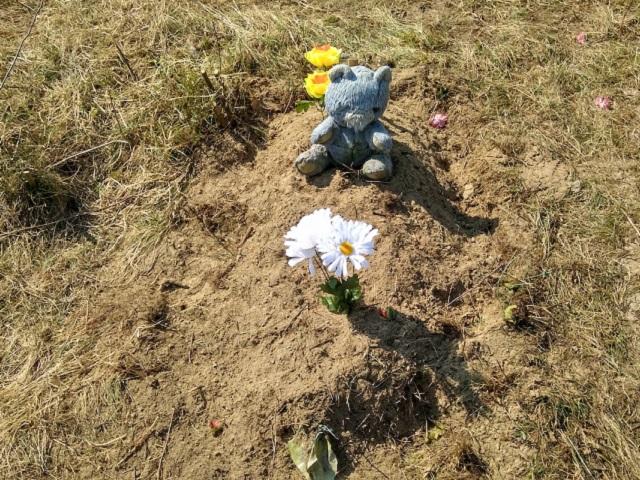 В Челябинской области собаки раскопали на кладбище тело младенца