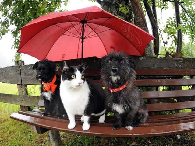 И снова штормовое предупреждение: какая погода ждёт южноуральцев 20 июля