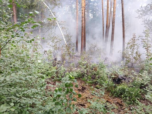Добровольцы спасли лес от пожара вблизи озера Инышко.