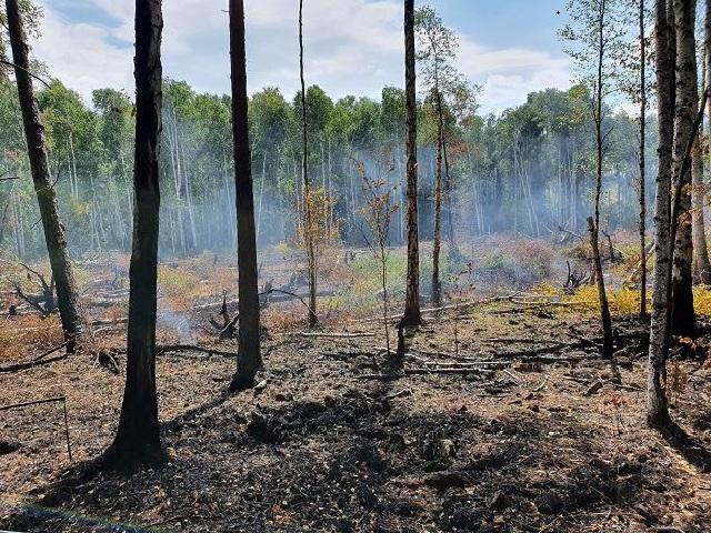 Миасские пожарные разыскивают поджигателей, причинивших крупный ущерб экологии