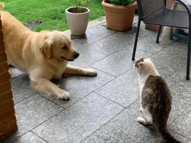 Не сошлись характерами: Сеть развеселили попытки пса втянуть кошку в свою игру