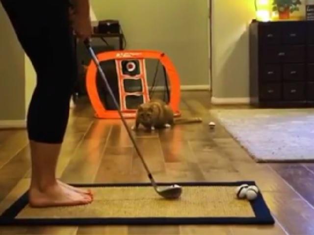 Спортивная парочка: кот и его хозяйка рассмешили пользователей придуманной ими игрой