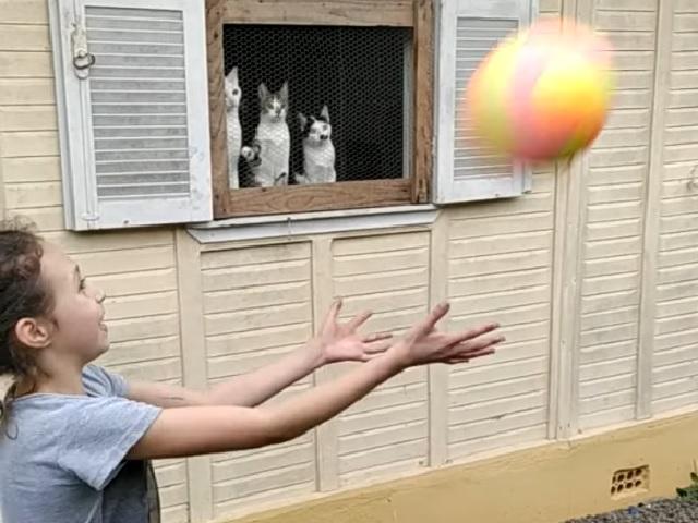 Забавная реакция котят на игру в мяч попала на видео