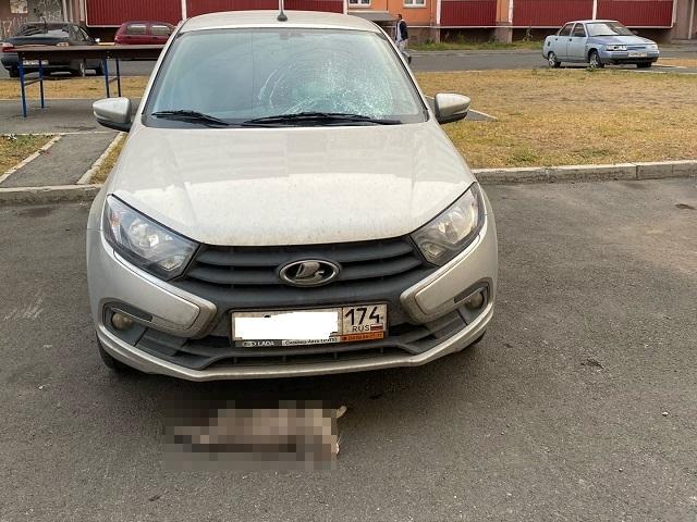 Животное погибло: на Южном Урале житель многоэтажки сбросил кошку на автомобиль