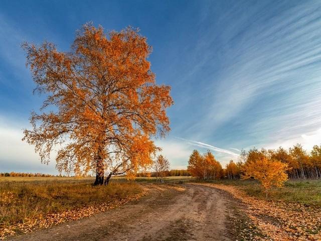 Какая погода ждёт южноуральцев в четверг, 15 октября