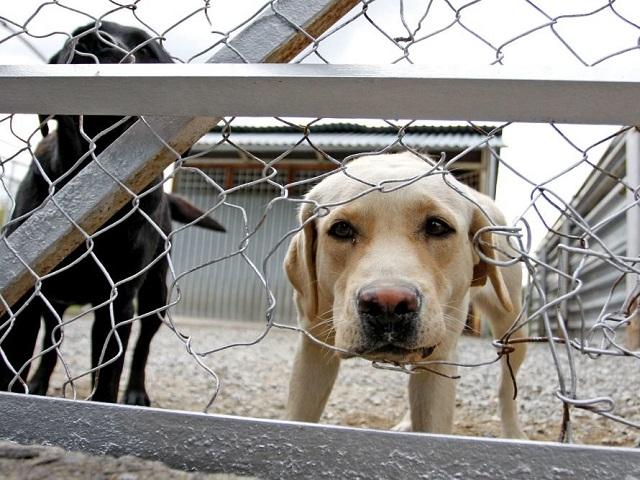 В Челябинской области появятся три государственных приюта для животных