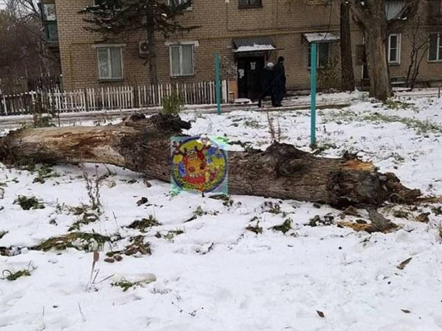 В Челябинской области на 8-летнюю девочку рухнуло дерево