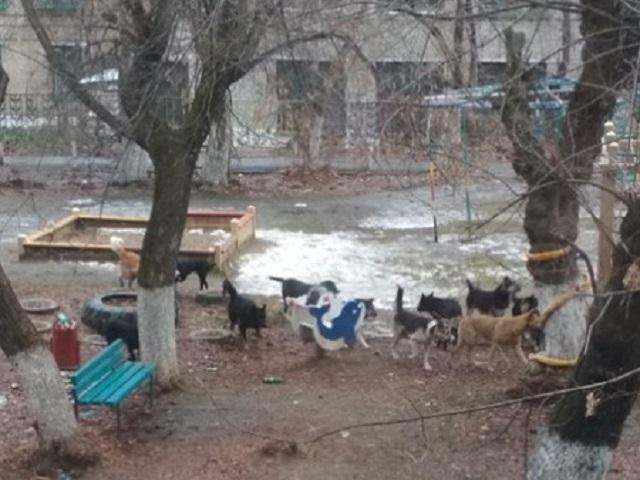 Южноуральские общественники пожаловались в прокуратуру на приют для животных