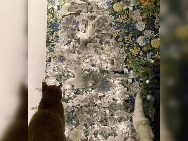 Найди кота: пользователи Сети не могут понять, где спрятался на елке питомец
