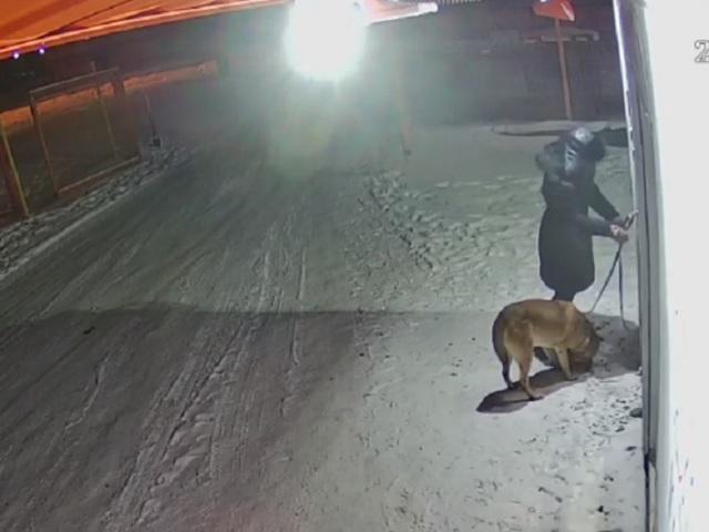 Ночью в Челябинской области собаку привязали к двери ветклиники с просьбой усыпить