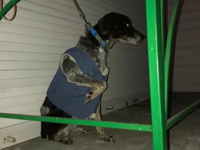 В Челябинской области пса бросили на морозе, привязав к поручню на крыльце магазина