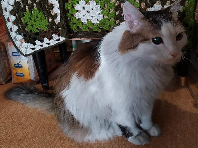 Челябинский кот Лёша номинирован в международном конкурсе о животных