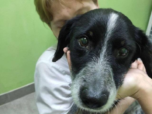 В Челябинской области нашли хозяйку пса Шарика, оставленного привязанным на морозе