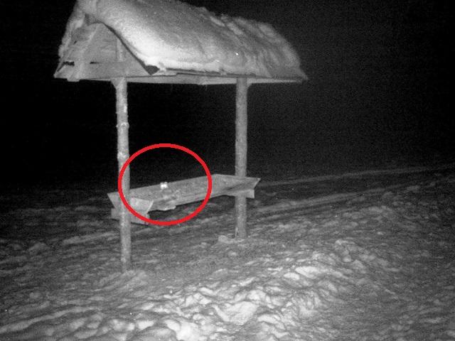 На Таганае в фотоловушку попала птичка, занесенная в красную книгу Челябинской области