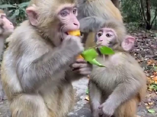 Жадная обезьянка возмутила пользователей Сети