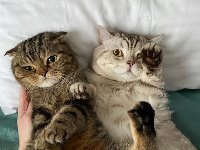 Коты-тиктокеры из Челябинской области попали в шоу на Первом канале