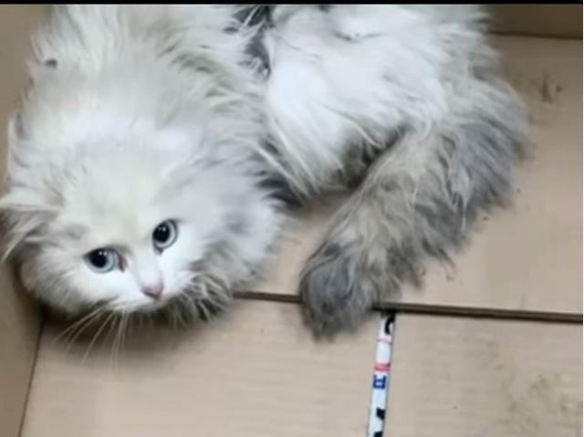На Южном Урале гревшаяся под капотом кошка осталась без шкурки